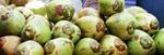 Coconuts - Public Domain Pictures