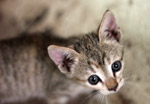 Cute Kitten - Public Domain Pictures