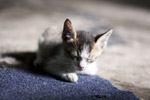 3346-kitten-eyes-closed - Public Domain Pictures