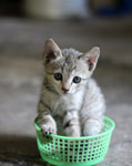 Kitten In Basket - Public Domain Pictures