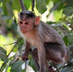 Monkey Sitting On Branch - Public Domain Pictures
