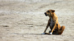 Street Dog Scratching - Public Domain Pictures
