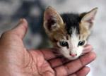 Baby Cat Kitten - Public Domain Pictures