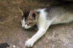 Cute Kitten Sleeping - Public Domain Pictures