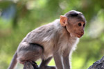 Cute Monkey Small - Public Domain Pictures