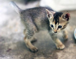 Cute Small Cat - Public Domain Pictures