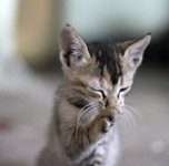 Funny Kitten 2 - Public Domain Pictures