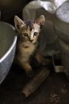 Kitten Hiding Utensils - Public Domain Pictures