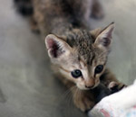 Kitty Cute - Public Domain Pictures