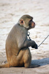Monkey - Public Domain Pictures