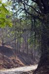 Pathway - Public Domain Pictures