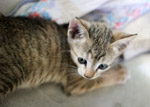 Striped Baby Cat Kitten - Public Domain Pictures