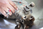 Tickling Kitten Cute - Public Domain Pictures