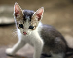 Very Cute Kitten - Public Domain Pictures