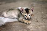Baby Cat Kitten Cute - Public Domain Pictures