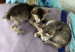 Baby Kittens Sleeping - Public Domain Pictures
