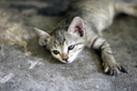 Cute Lovely Kitten - Public Domain Pictures