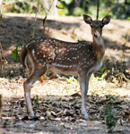 Deer 3 - Public Domain Pictures