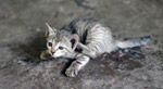 Kitten 3 - Public Domain Pictures