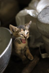 Kitten - Public Domain Pictures