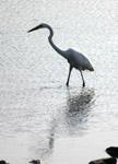 Stork White Bird - Public Domain Pictures