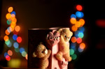 Bokeh Lights Love Teddy - Public Domain Pictures