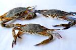Crabs 2 - Public Domain Pictures