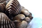 Pile Of Shells - Public Domain Pictures