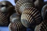 Pile Shell - Public Domain Pictures