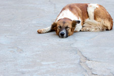 Dog Sleeping On The Road - Public Domain Pictures