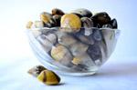 3626-sea-shells-bowl-3 - Public Domain Pictures