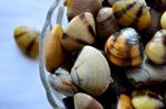 Sea Shells Bowl - Public Domain Pictures