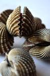 Sea Shells - Public Domain Pictures