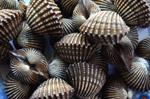 3631-shell-pile - Public Domain Pictures