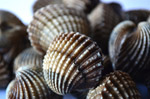 Shell Piles - Public Domain Pictures