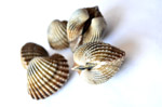 3633-shell - Public Domain Pictures