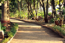 Garden Pathway - Public Domain Pictures
