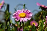Flower In Sun - Public Domain Pictures