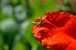 Green Insect On Flower - Public Domain Pictures