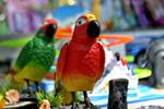 Parrot Toys - Public Domain Pictures