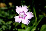 White Floral Flower - Public Domain Pictures