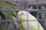 Birds In Captivity - Public Domain Pictures