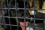 Black Dog Pet Store - Public Domain Pictures