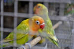 Colorful Birds Pet Store - Public Domain Pictures