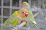 Pet Store Parrots - Public Domain Pictures