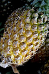 Pineapple - Public Domain Pictures
