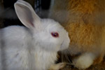 Rabbit - Public Domain Pictures