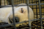 3821-sad-dog - Public Domain Pictures