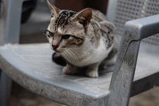 387-cat-on-old-chair - Public Domain Pictures