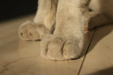 388-cat-paws-closeup - Public Domain Pictures